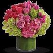 Floraria Alex logo